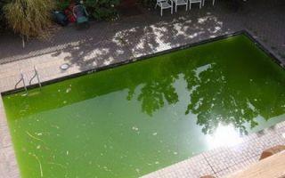 Что делать, если вода в бассейне цветет?