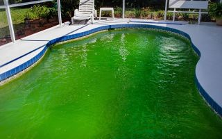 Альгициды – средства от цветения цианобактерий в воде частного бассейна