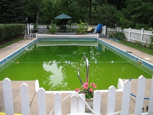 Без альгицидов бассейн зарастет водорослями