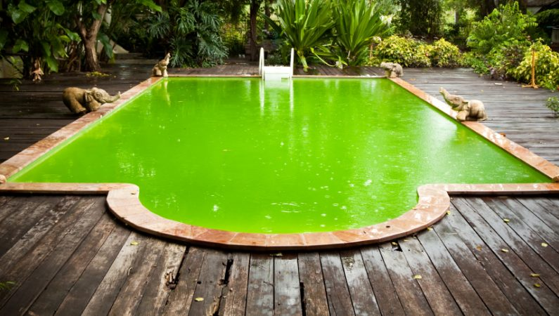 Альгициды помогут против водорослей
